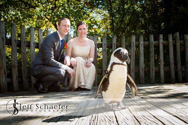 Cincinnati Zoo Wedding Penguin