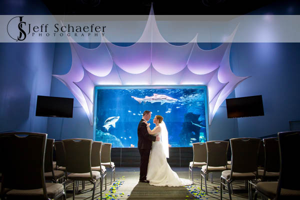 Newport Aquarium Wedding Venue Shark Ray Bay Theater